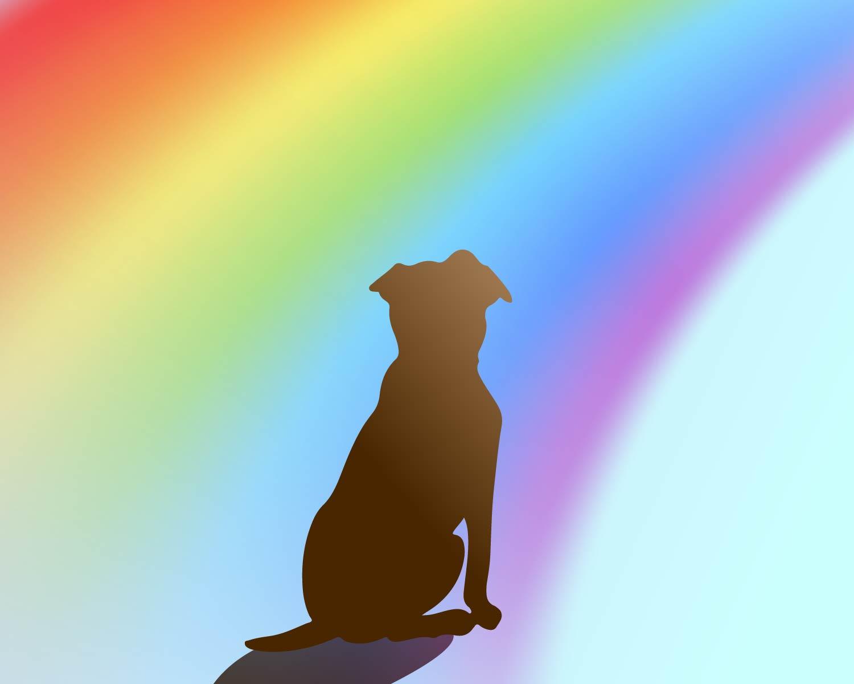 rainbowdog-01